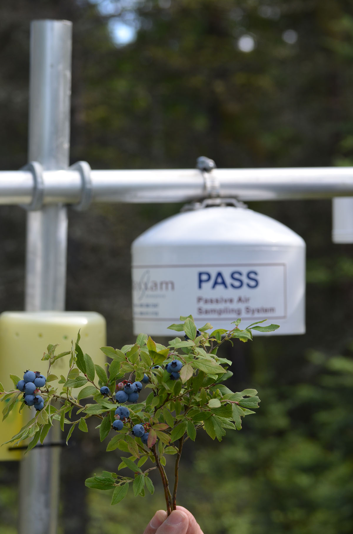 Passive air pollution monitors were installed at five berry patches, at the request of the Berry Focus Group, in 2014.